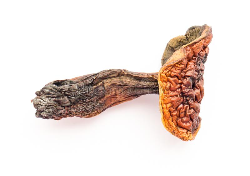 The Dried mushroom. stock photography