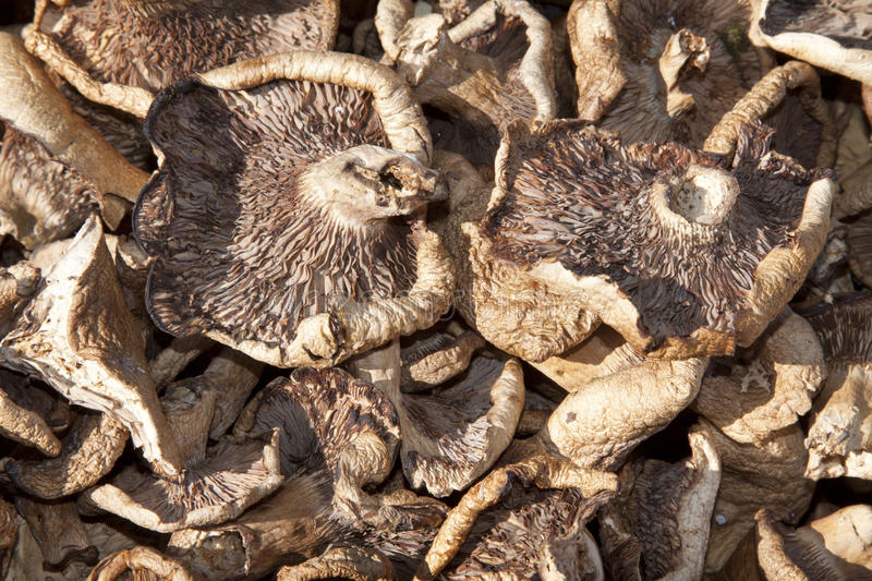 Dried mushrooms. Closeup of dried mushrooms, a kind of delicious food royalty free stock photo