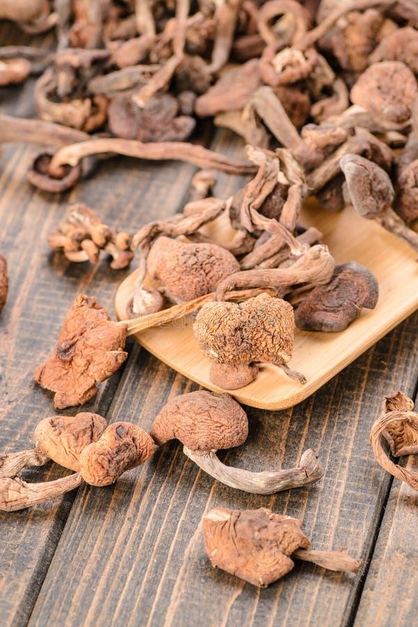 Dried mushrooms stock photos