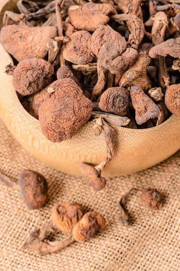 Dried mushrooms. Dried hazel mushroom, a kind of wild mushrooms in china stock images