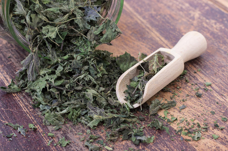 Dried nettle leaves. Glass and shakers with dried nettle leaves royalty free stock photography