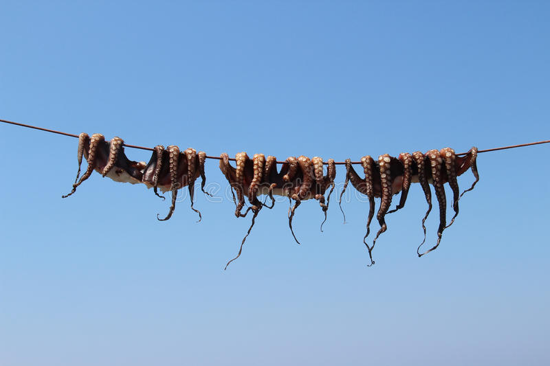 Dried octopus on the Greek sun stock photography