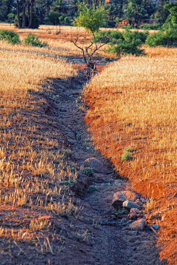 Download Dried out river stock image. Image of river, thirst, desert - 20777027