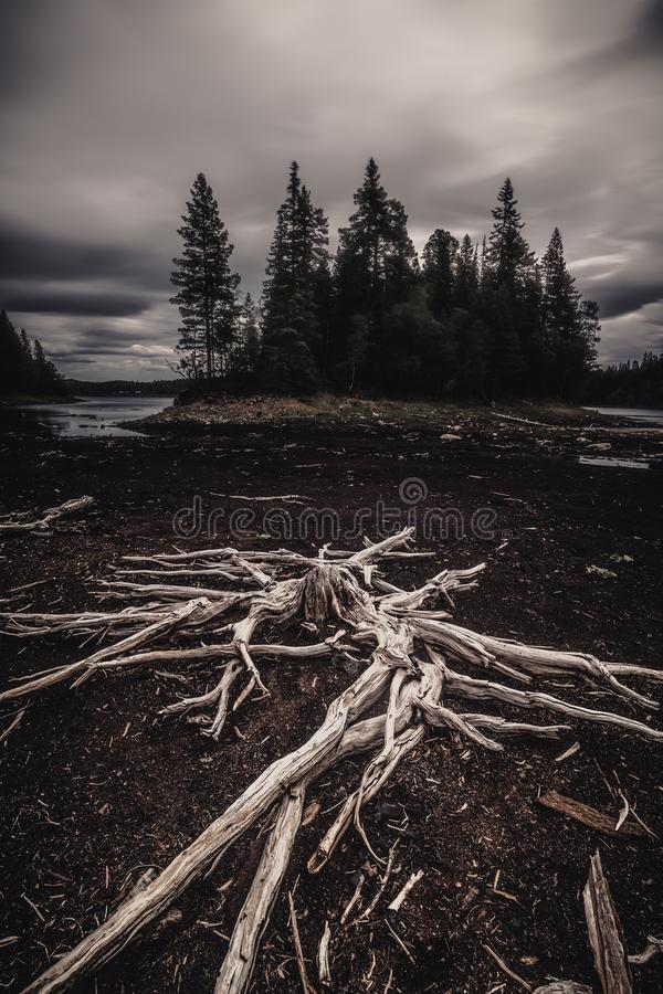 Free Dried Out Trees And Tree Trunks On The Black Beach Of Dried Out Lake Stock Photography - 138630702