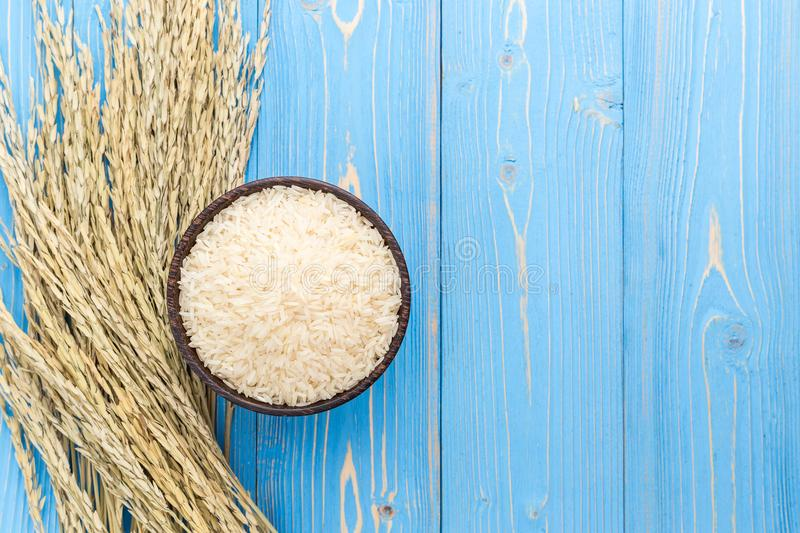 Dried paddy rice crop and jasmine rice in bowl on blue wooden bo stock images