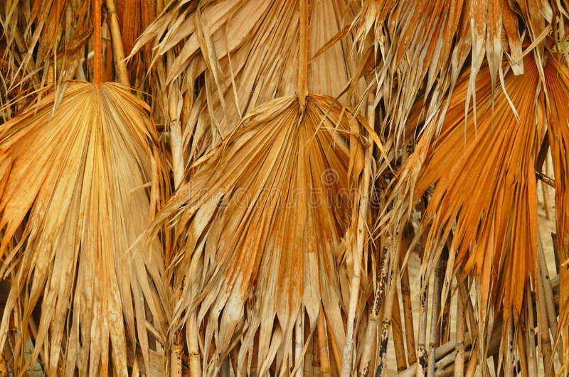 Download Dried palm leaves stock image. Image of primitive, huts - 557899