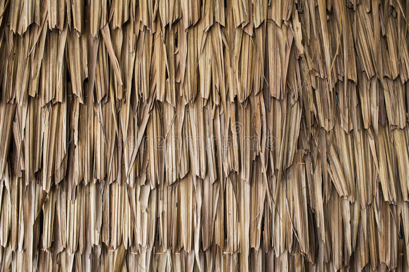 Dried Palm Texture Stock Photo Image Of Architecture