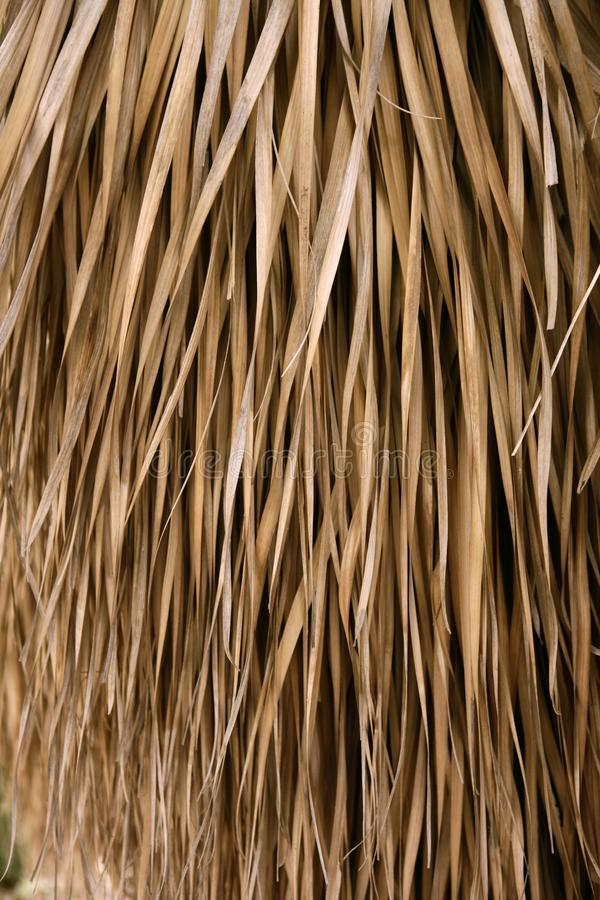 Dried Palm Tree Leaves Tropical House Roof Stock Photo