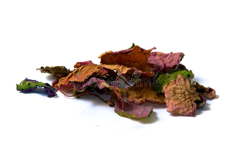 Dried patchouly leaves. A bunch of dried multicolored patchouli leaves over white, not isolated royalty free stock images
