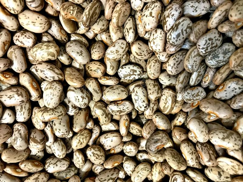 Dried Pinto Beans,most popular bean in the United States and northwestern Mexico,. Dried Pinto Beans, most popular bean in the United States and northwestern stock photo