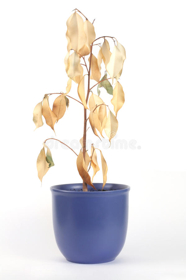 Download Dried plant stock image. Image of petal, lost, brown - 13271057