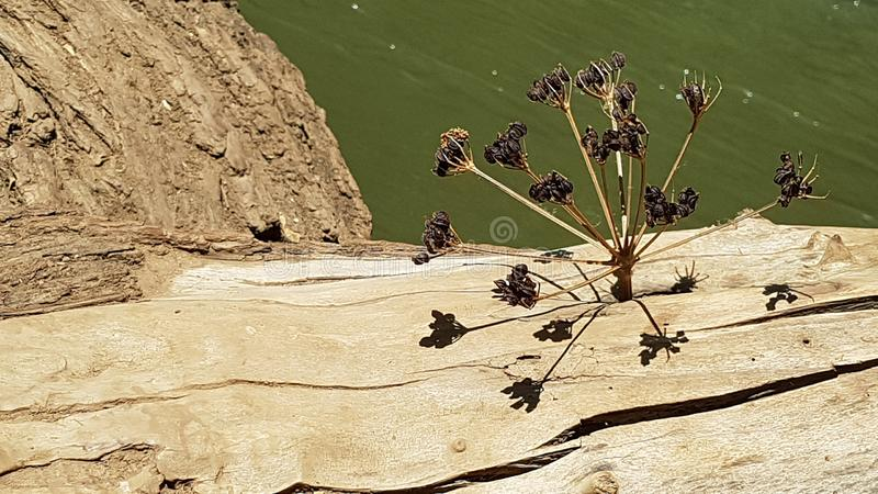 A Dried Plant Stuck In A hole In A Tree Trunk Above The Hermon River Creating A Multidimensional Structure With its Shadow, Israel royalty free stock images