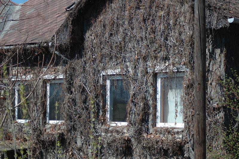 Dried plants on the wall of the house. royalty free stock photos