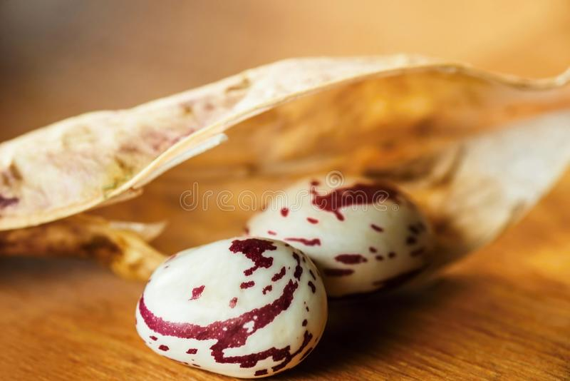 Dried pod and two bean grain. Open dried pod and two red spotted bean grain, closeup on golden blurry background royalty free stock photos