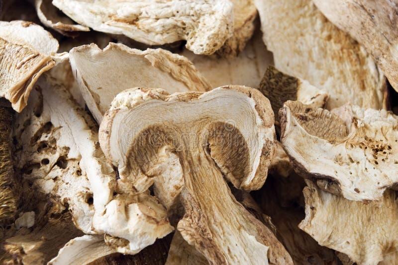 Dried Porcini Mushrooms royalty free stock image