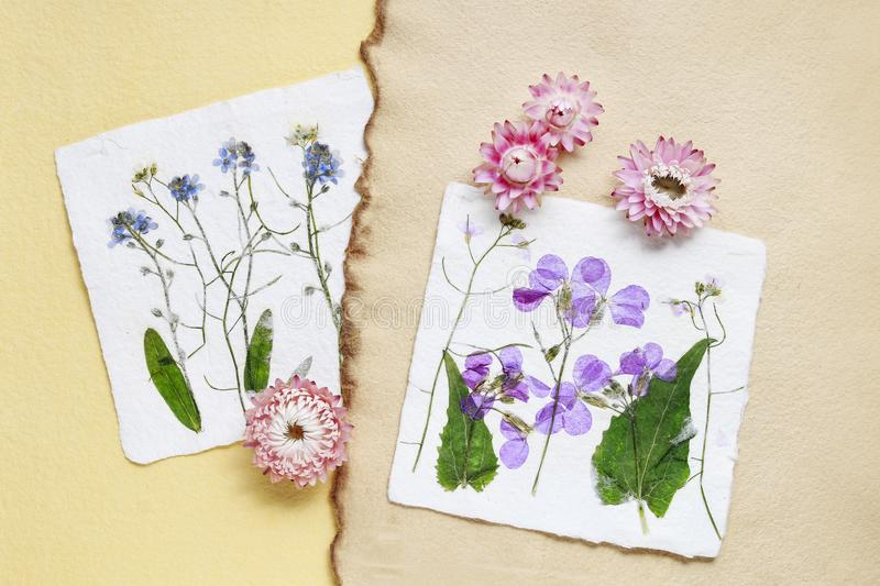 Dried pressed flowers on vintage paper background royalty free stock photography