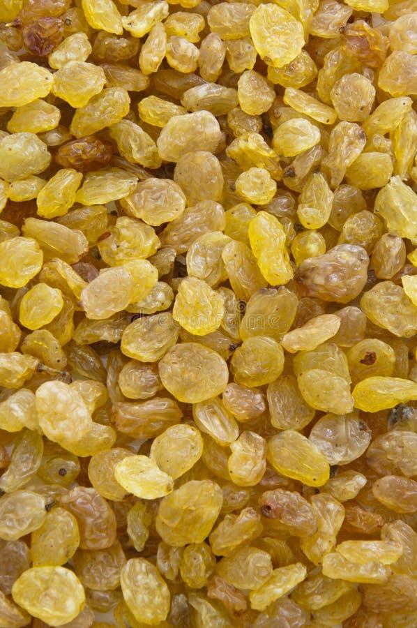 Dried Raisin Texture stock image