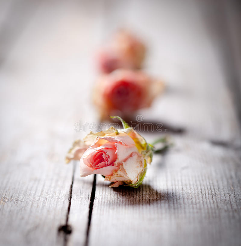 Dried rose buds on a wooden background royalty free stock photos