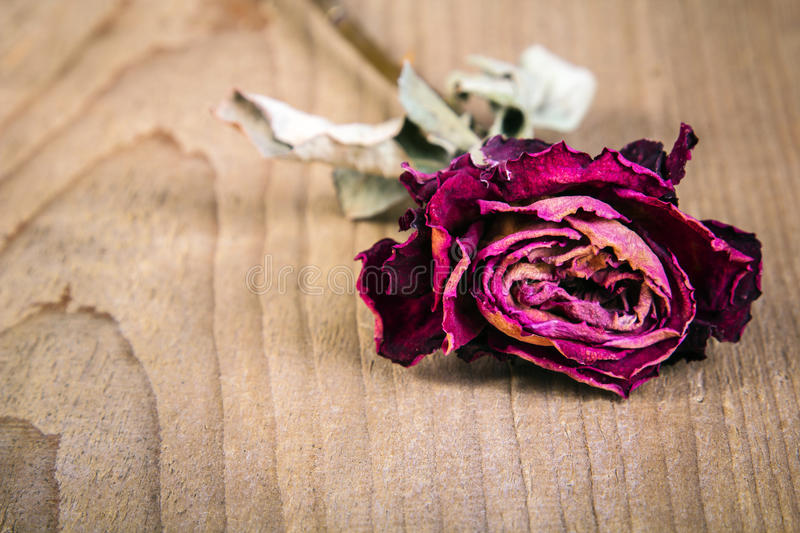 Dried rose on a wooden background. Copy space stock photography