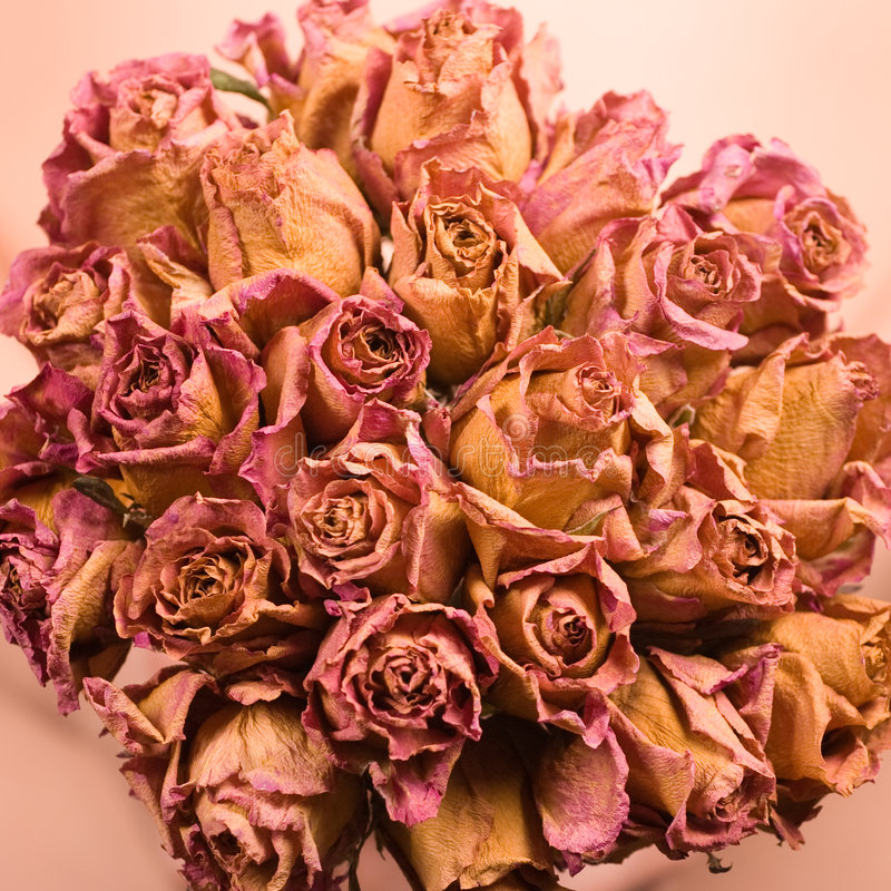 Dried roses. Beautyfull bouquet of dried roses stock image