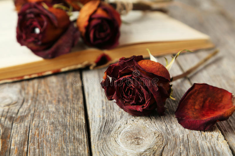 Dried roses. On grey wooden background royalty free stock images