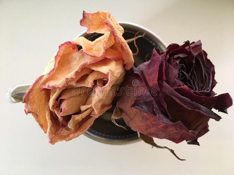 Dried Roses in a Silver Cup stock photos