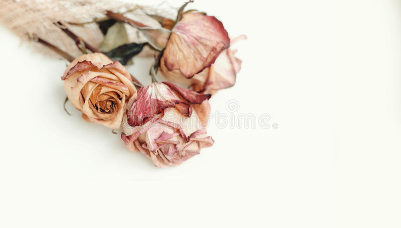 Dried roses stacking. On a white background royalty free stock photos