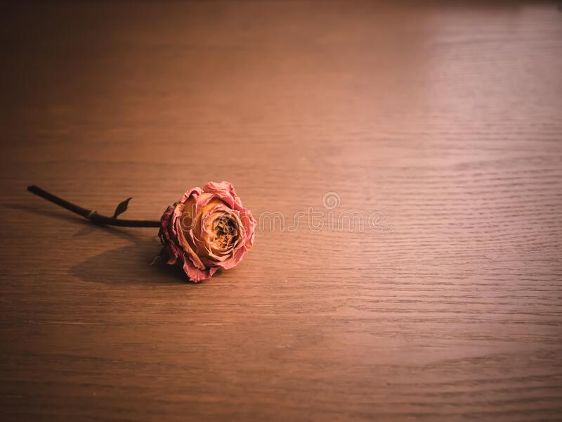 Dried Roses on Wood Background royalty free stock photos