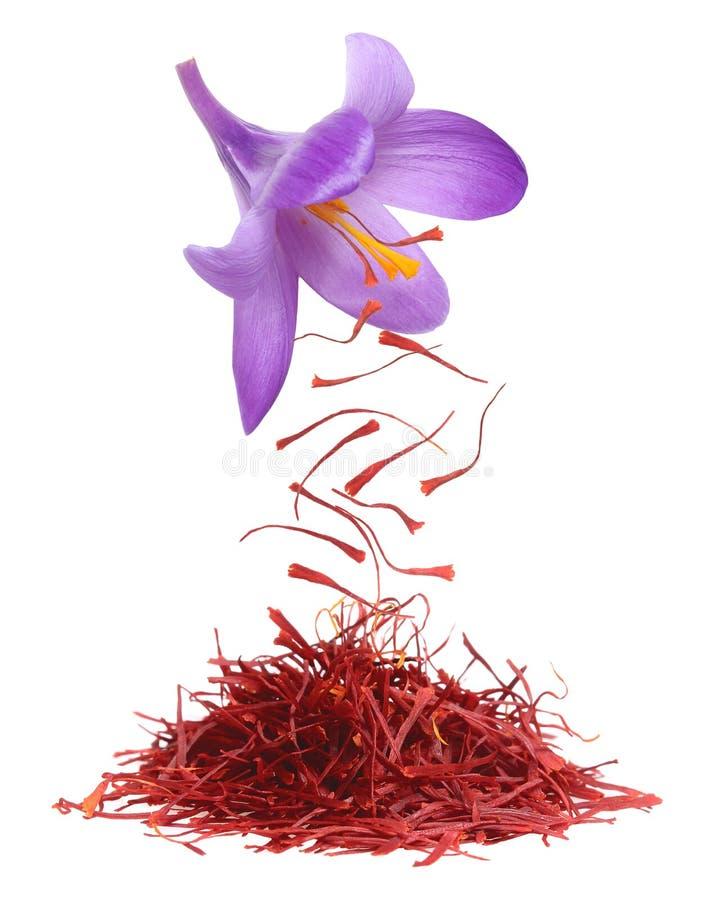 Free Dried Saffron Spice Stock Photos - 109799093