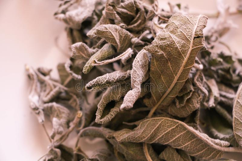 Dried sage leaves Salvia officinalis isolated on white. Background with central focus stock photo