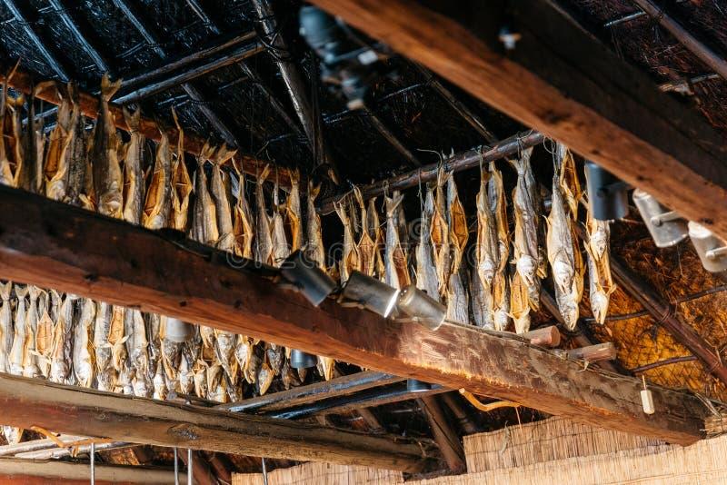 Dried salmons inside house of Shiraoi Ainu Village Museum in Hokkaido, Japan royalty free stock photography