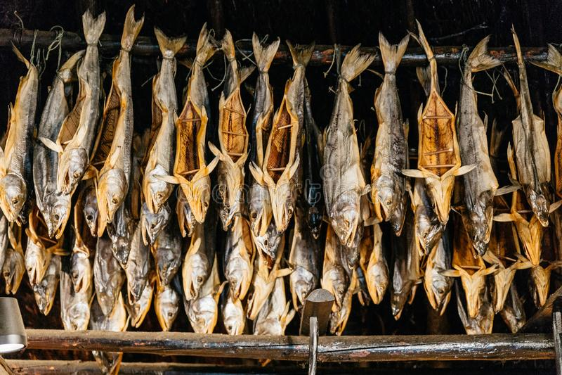 Dried salmons inside house of Shiraoi Ainu Village Museum in Hokkaido, Japan stock photo