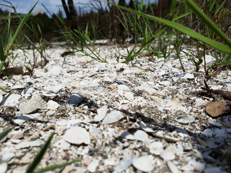 Dried salt lake bed with vegetation stock images