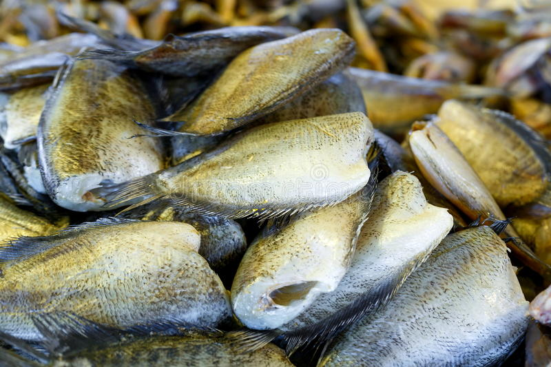 Dried salted damsel fish,Trichogaster pectoralis . stock image