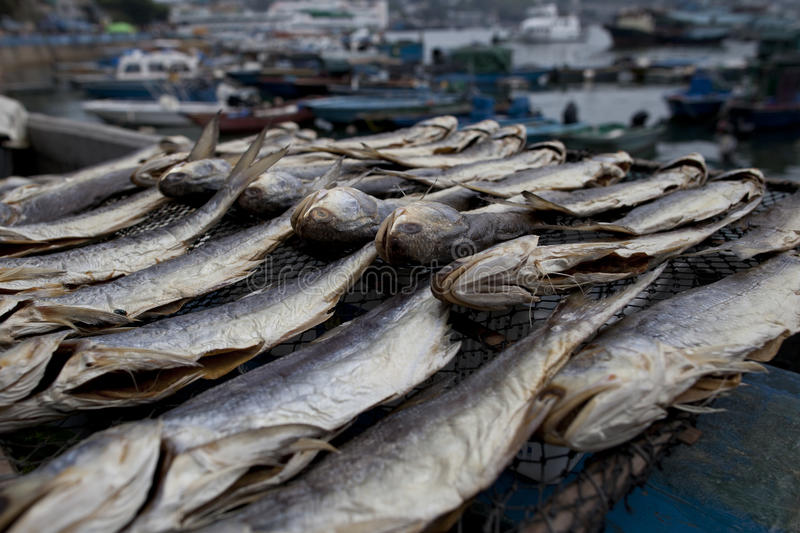 Dried salted fish display royalty free stock photo