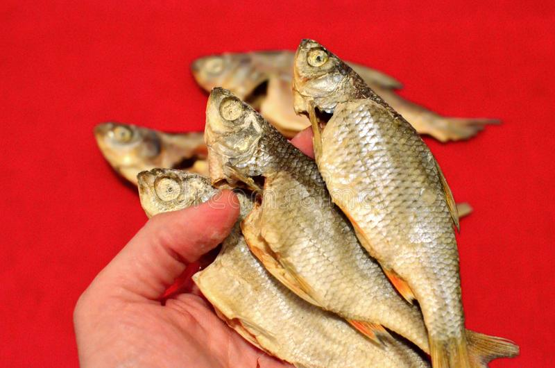 Dried salted fish Vobla on red background. stock photos