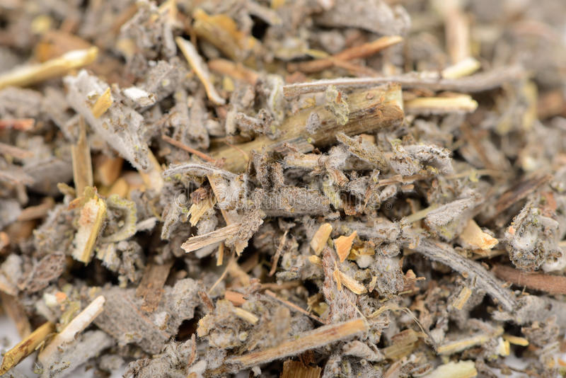 Dried Salvia Officinalis (Sage) Herb Close-Up. A close-up of dried salvia officinalis (sage royalty free stock photos