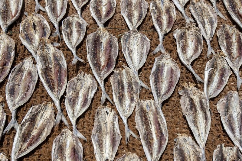 Dried sardine fish on hessian matting. Sardine fish drying in the sun on hessian matting at Negombo in Sri Lanka stock photography