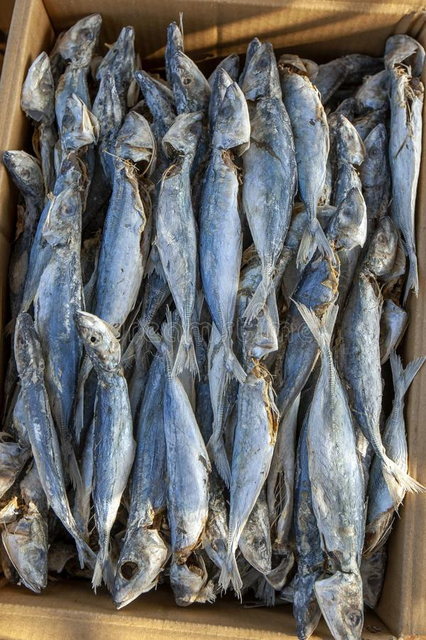 Dried sardine fish packed into a box. Dried sardine fish  packed in a cardboard carton ready for sale at Negombo beach in Sri Lanka stock images