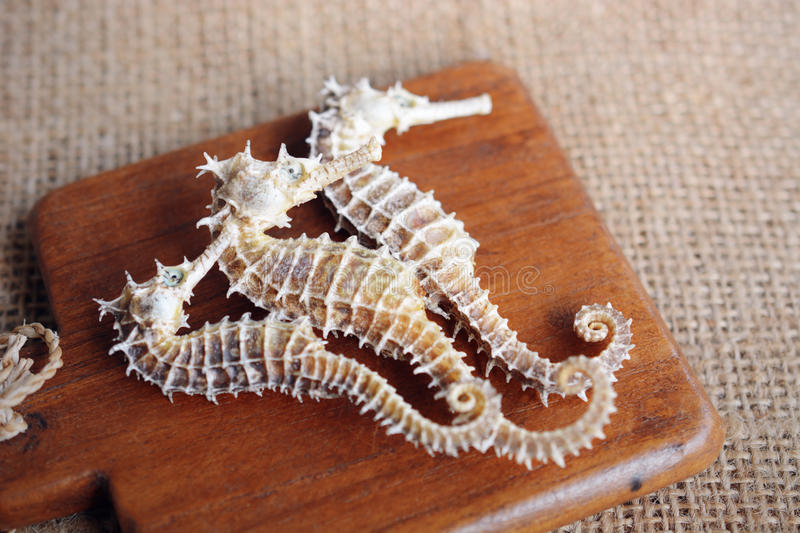 dried seahorse on wooden background royalty free stock images