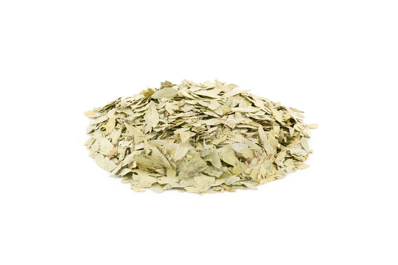 Dried Senna Leaves. White Background stock photography