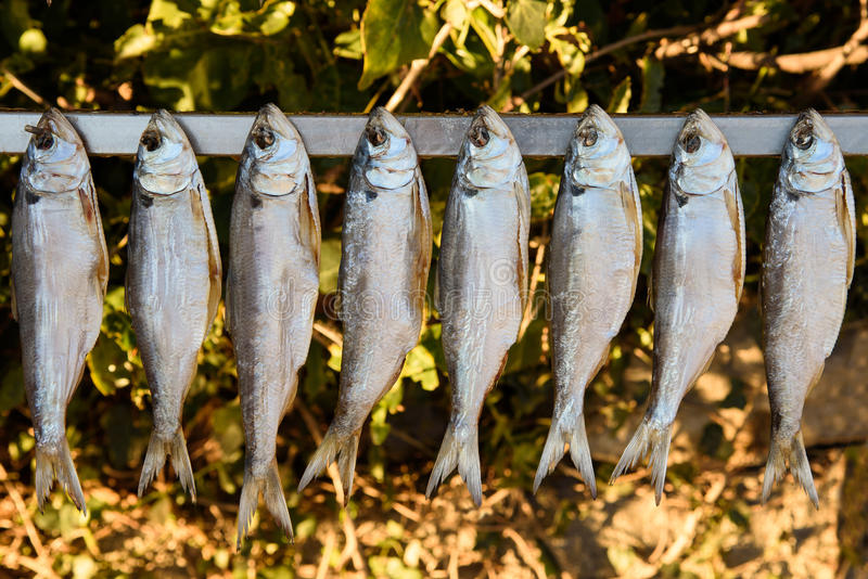 Dried shad misultin royalty free stock photography