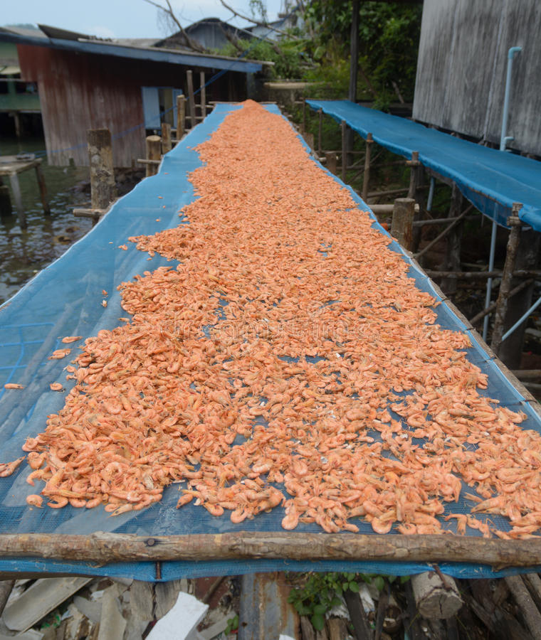 Dried shrimp. Dried food is a mix of many things royalty free stock image