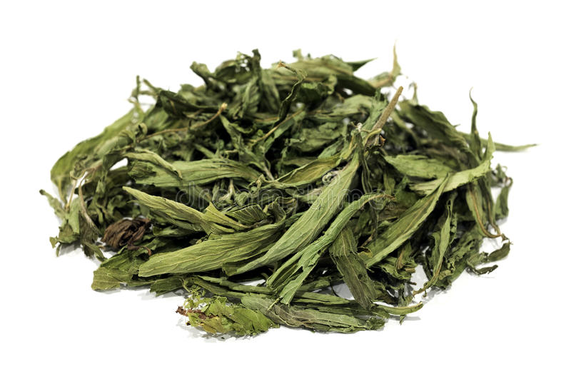 Dried stevia leaves. On a white background stock image