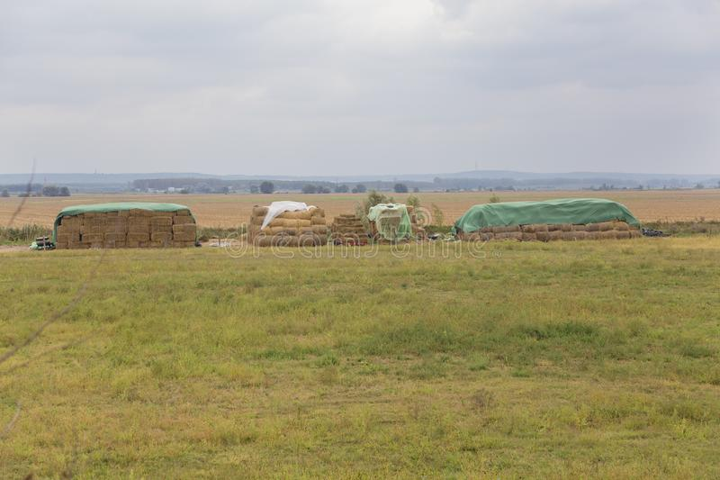 Dried straw bales ready for winter stock images