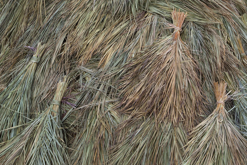 Dried sugar cane background stock photography