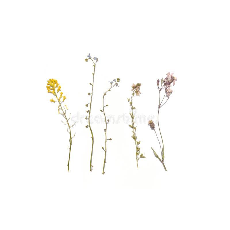 Dried summer flowers. Wildflower Herbarium royalty free stock image