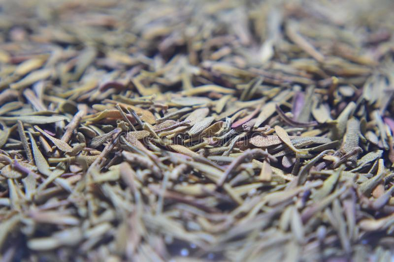 Dried thyme leaves. A macro photograph of dried thyme leaves stock images