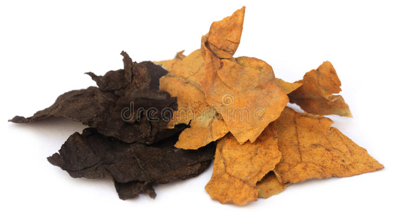 Dried tobacco leaves. Over white background stock photos