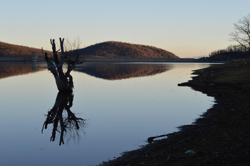 Dried tree in the artificial lake royalty free stock image